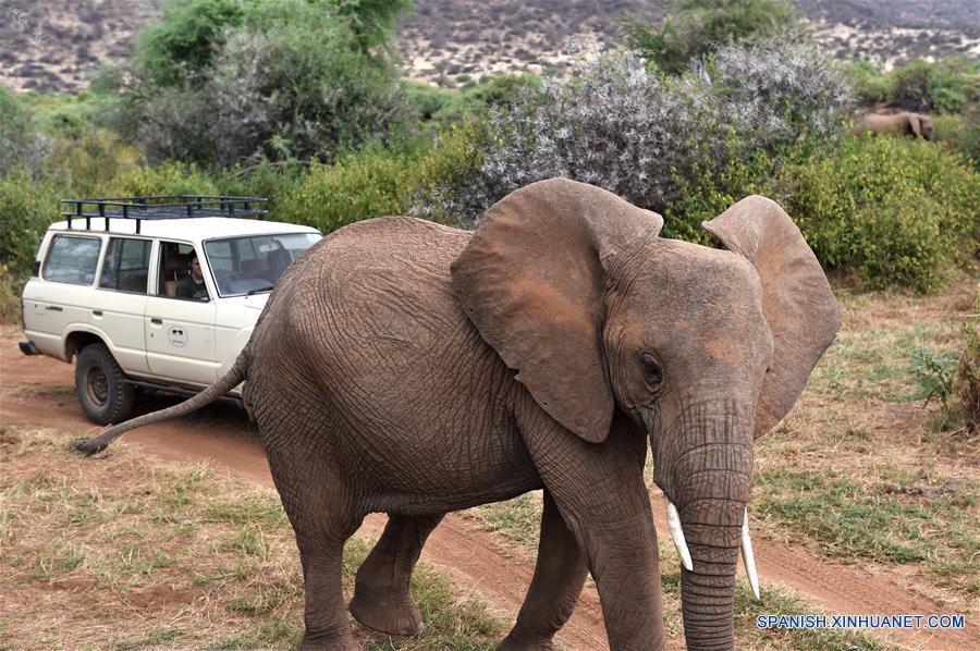 KENYA-SAMBURU-WILDLIFE CONSERVATION-ELEPHANTS