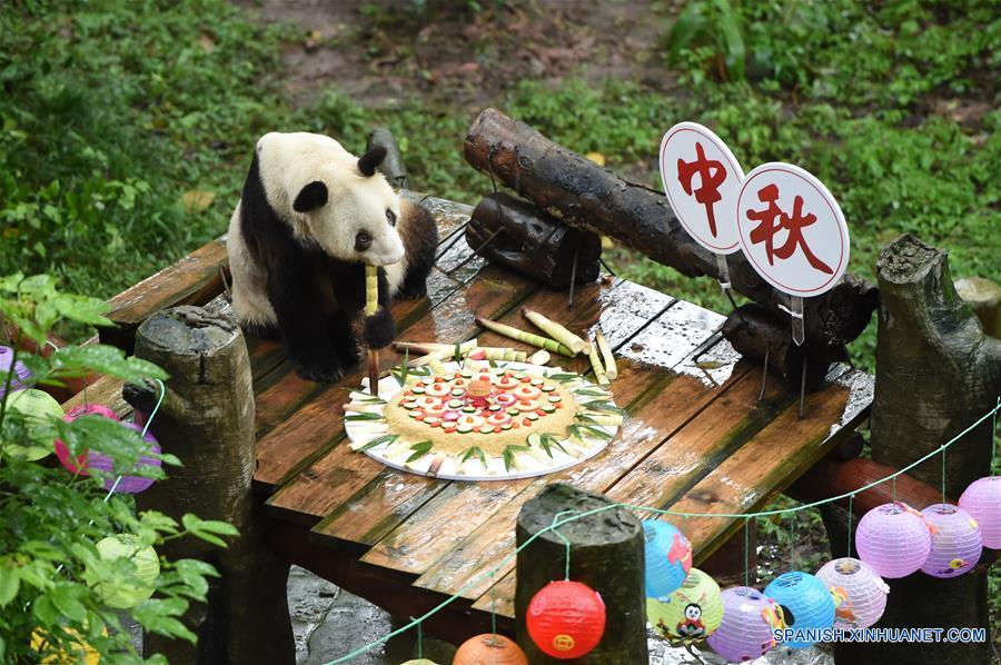 CHINA-CHONGQING-FESTIVAL DE MEDIO OTOÑO-PANDA GIGANTE