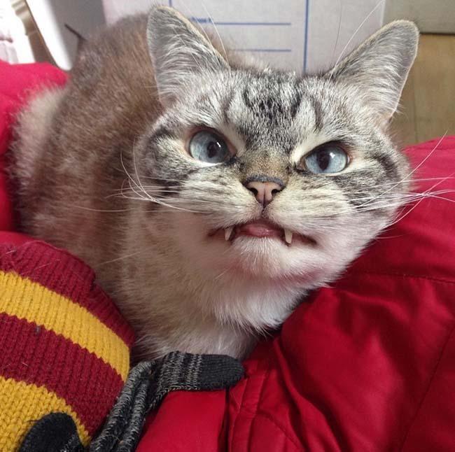 谁有快猫,就是想像快手的那种,求发