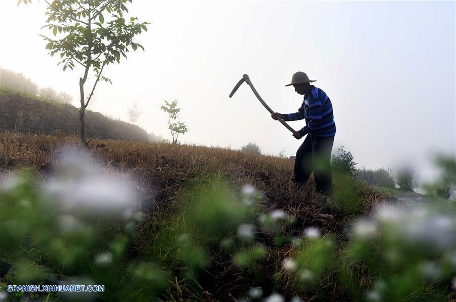 Inaugura La Temporada Agrícola De Siembra A Través De China