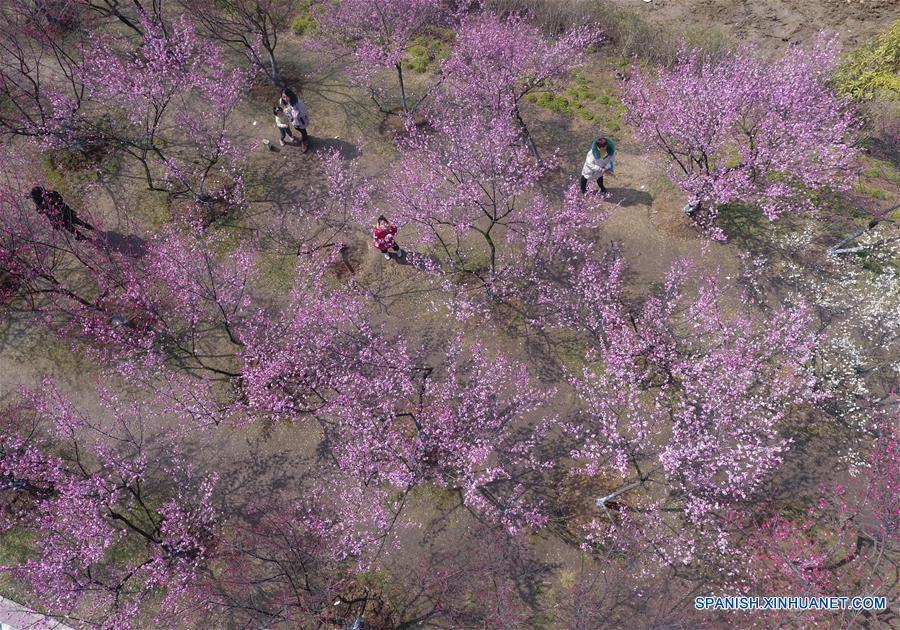 CHINA-HUBEI-PRIMAVERA-FLORES
