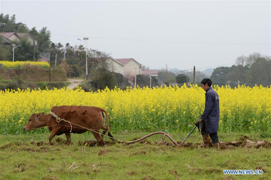 XINA-HUNAN-AGRICULTURA
