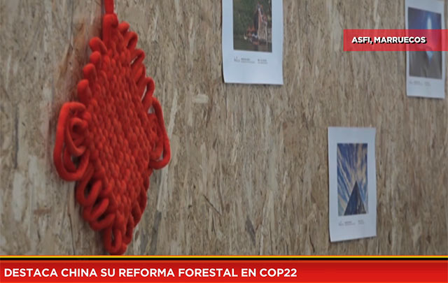Destaca China su reforma forestal en COP22