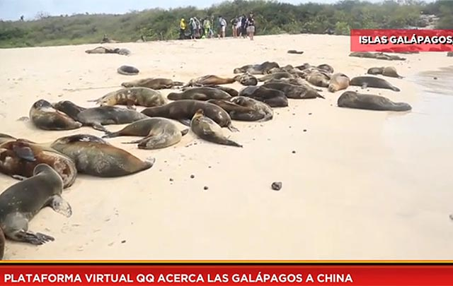 Plataforma virtual QQ acerca las Galápagos a China
