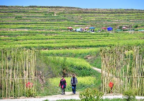 Shaanxi: Campo de flores de colza en Xi'an
