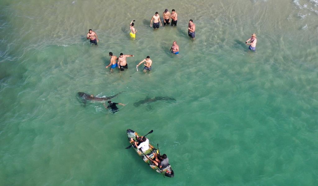 Israelíes se bañan junto a tiburones en mar Mediterráneo
