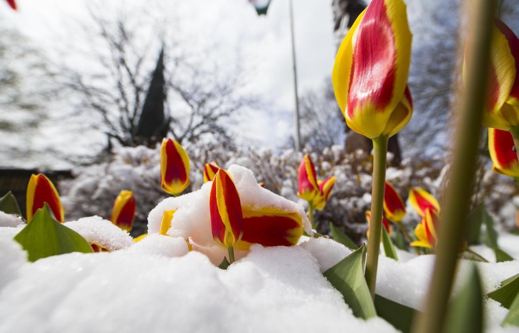 Caída de nieve golpea área del Gran Toronto, Canadá
